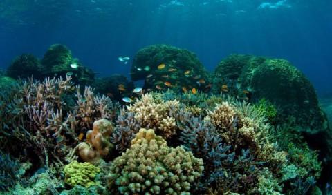На дне океана: экскурсия для детей в московский океанариум